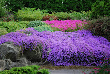 Vakre hager