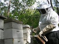 Tending Bermuda bees. Photograph by Brian Quinn, Travel Writer