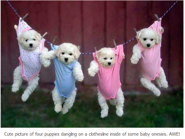 Shabby Cottage Collectibles Puppies Dressed In Pink