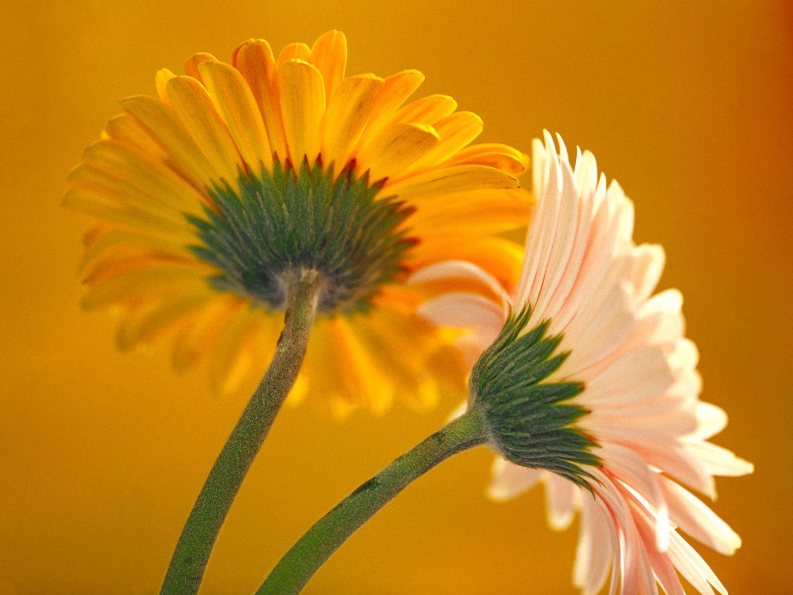 100 Most Beautiful Flower