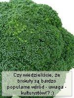 Brokul brokuly ciekawostki ciekawe fakty