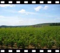~ 葡萄酒的故鄉 ~