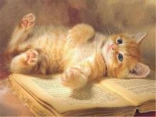 I love cats!!!!!