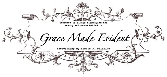 Grace Made Evident