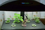aerogarden reviews canada