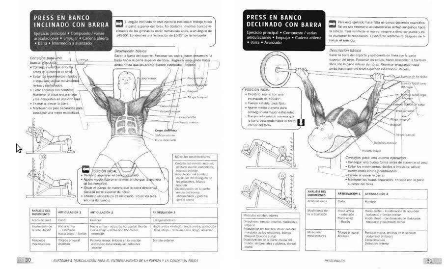 Lujoso Colorear Libro Anatomía Festooning - Ideas Para Colorear ...