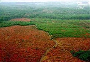Bosques y agrocombustibles