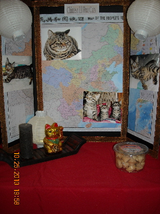 圖片標題: Chinese Li Hua Cat in the US