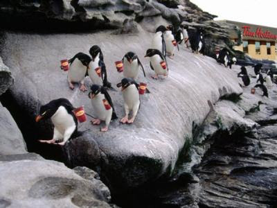 How Canadians are ruining the Antarctic...