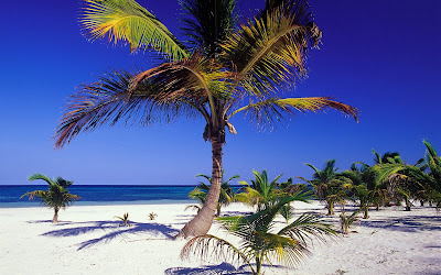 palm_tree_pictures