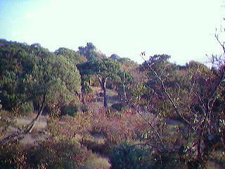 утриш - реликтовый можжевеловй лес