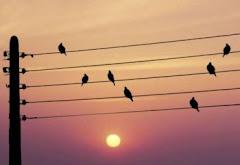 Pentagrama de Pájaros