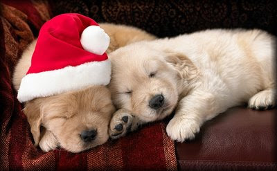 Christmas cute dogs