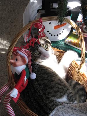Christmas cats pics