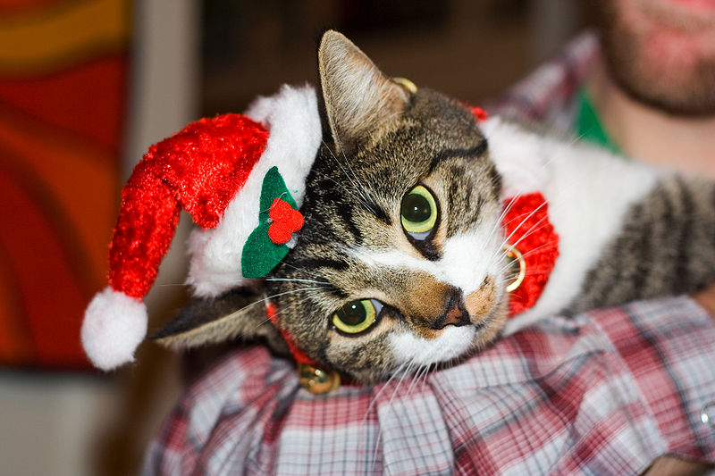 funny christmas pictures. Funny Christmas Cat