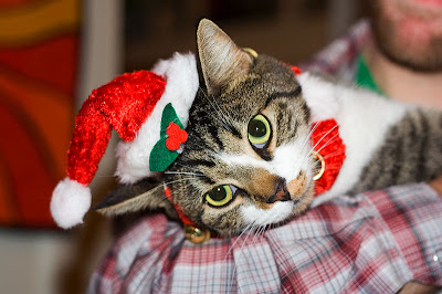 Funny Christmas cat Photo
