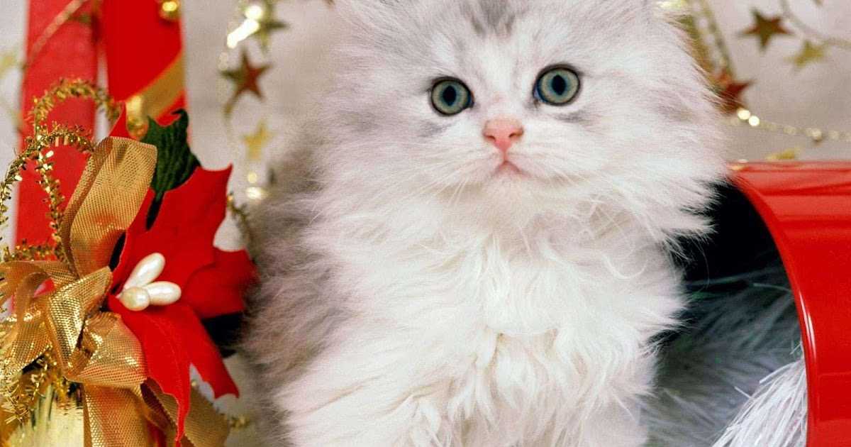 cute christmas kitten wallpapers free christian wallpapers