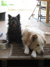 Ours dogs Polly & Bruce