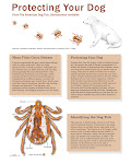 Know Your Ticks