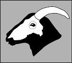 Bighorn Sheep Skull