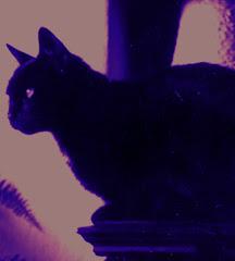 Lindusia, mój pierwszy kot, lata siedemdziesiąte