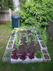 The Cinder Block Garden and Compost