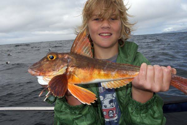 """Den Jack, een vun eisen Junioren mat engem """"specimen fish"""". """"Red gurnard"""" oder roter Knurrhahn"""