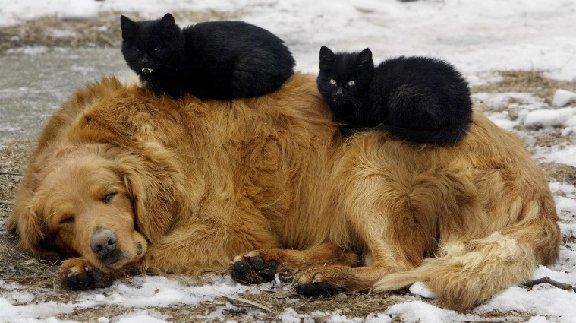 Bonne St Valentin Chien+et+chats