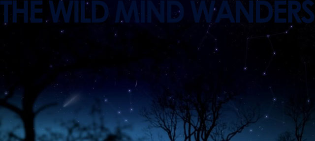The Wild Mind Wanders