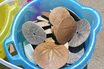 Favors With Love: DIY - Wedding Favor - Sand Dollar Magnet