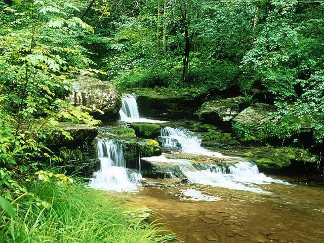 la naturaleza es muy hermosa: la naturaleza y freces animadas