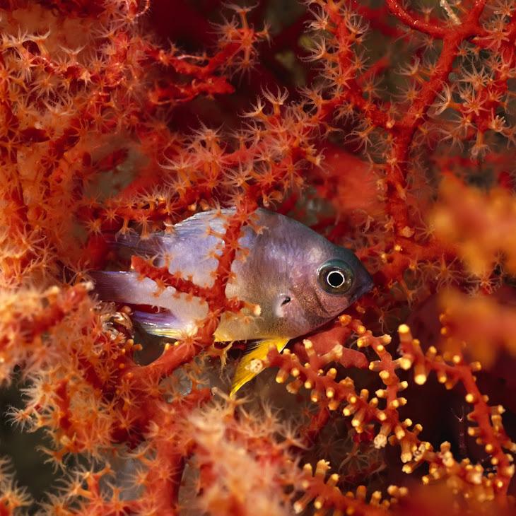Amazing Underwater Life Picture