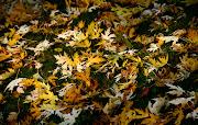 Autumn HD WallpaperSet 2 (yellow of autumn wallpaper hd)
