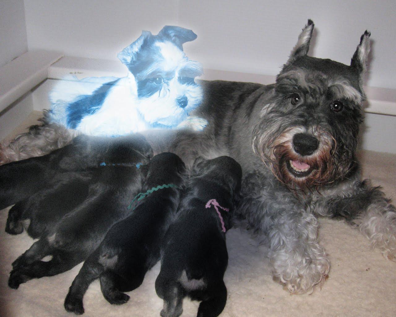 Dog Give Birth
