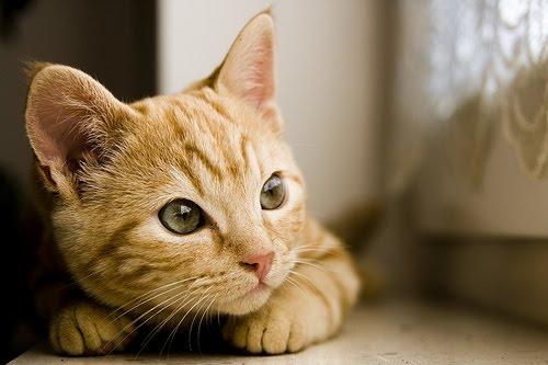 [10+Increibles+fotos+de+Gatos+5.jpg]