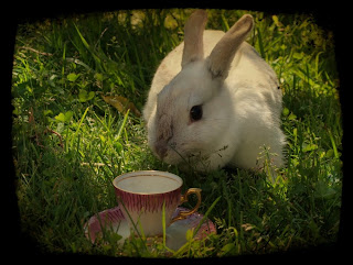 White rabbit, vit kanin, Alice in Wonderland, Alice i Underlandet, teacup, cute