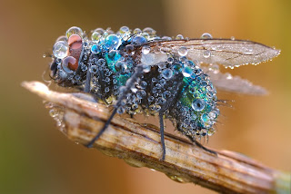 imagenes de los insecto mas bellos del mundo
