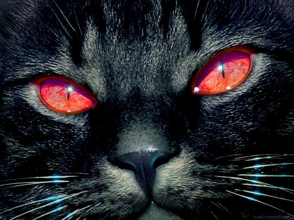 http://2.bp.blogspot.com/_2aYb9zM9alk/TTaFyFCUrWI/AAAAAAAAADQ/He8rdVp7T3c/s1600/black_cat.jpg