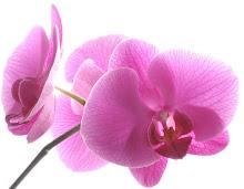 Min orkidé