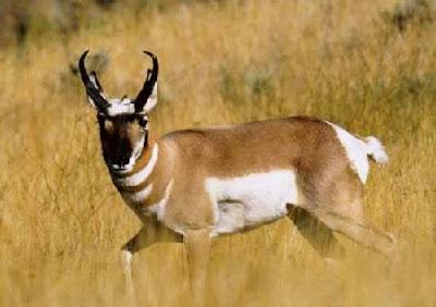 10 Jenis Binatang Yang Cenderung Menjadi Homo Atau Lesb