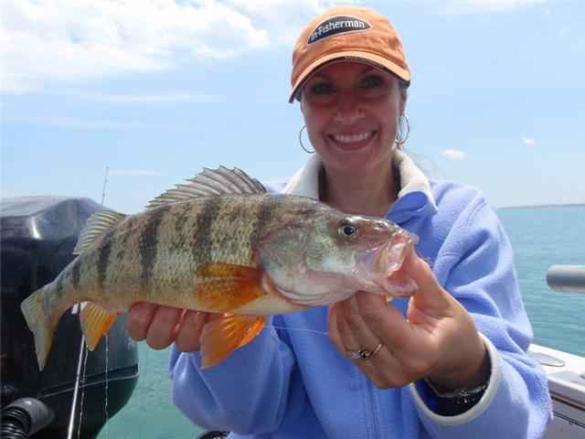The Fishing News Hot Jumbo Perch On Lake Michigan