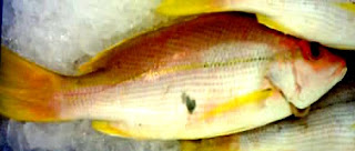 Kosher living and diet for messianic believers kee fish for Fish without scales