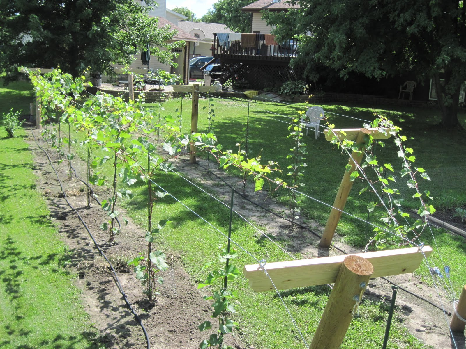 Growing Grapes in my Vineyard: Finished Trellis