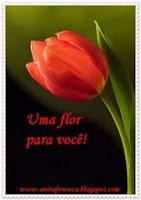 Uma Flor pra você