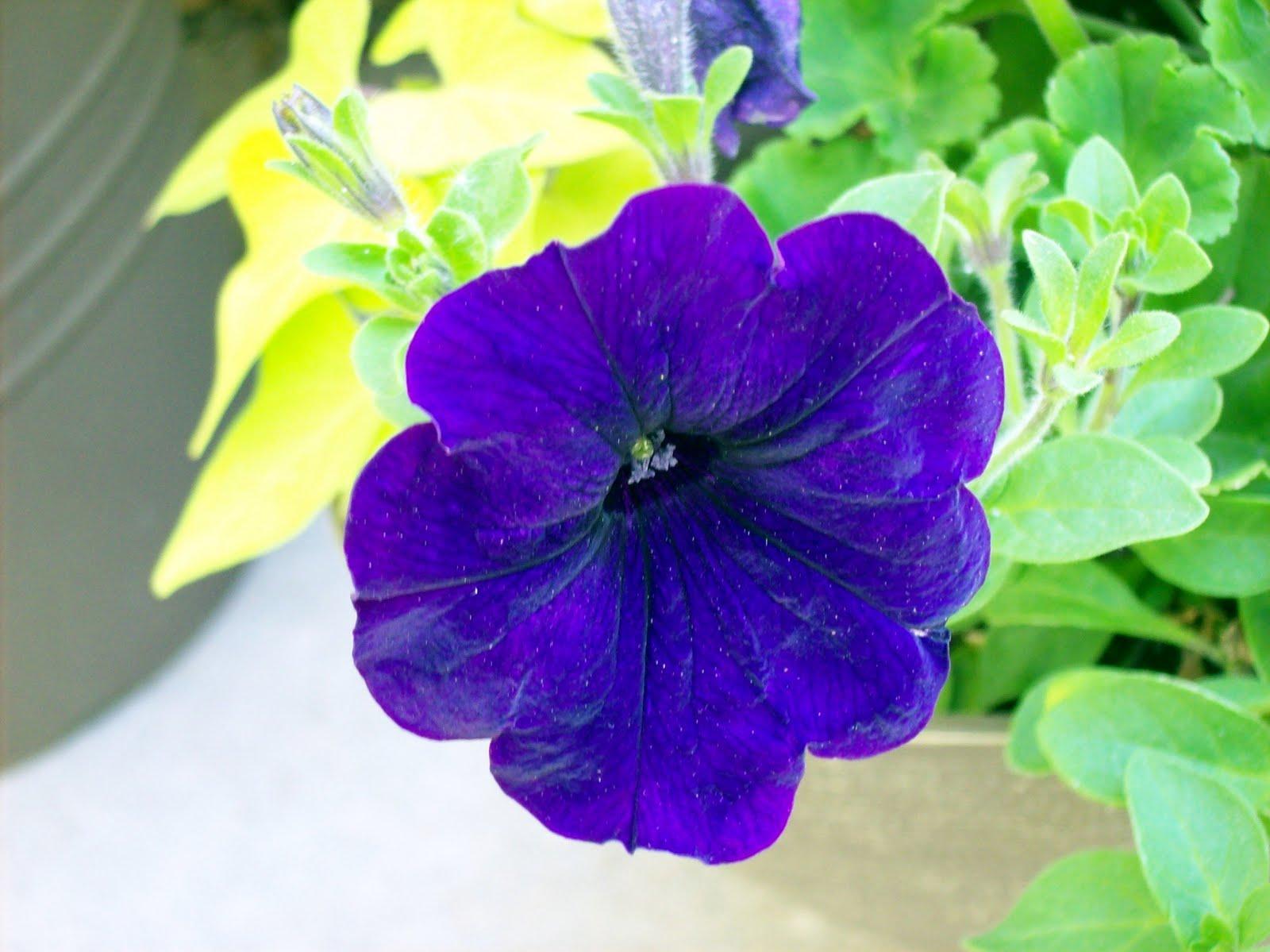 http://2.bp.blogspot.com/_2eSfnCtBHyw/TArfjeCsn6I/AAAAAAAAC5E/xPoYEVjMT78/s1600/2010+Flower+Pr0n+026.jpg