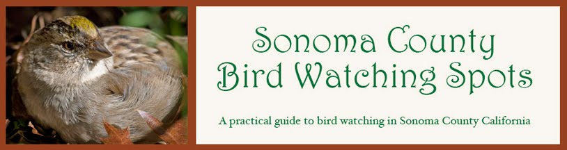 Sonoma County Bird Watching Spots