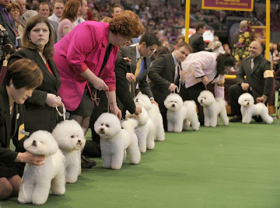 Kennel Club Puppies on Facts Around Us  Annual Westminster Kennel Club Dog Show 2010