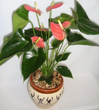 Jardiner a y trucos for Trucos jardineria