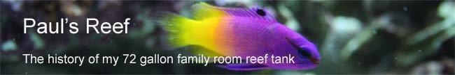 Paul's Reef