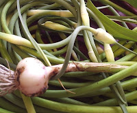 garlic and garlic scapes